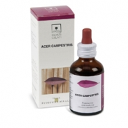 Acer campestris 50 ml.